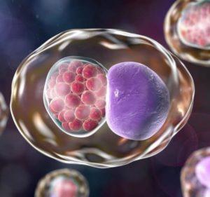 რა დაავადებაა ქლამიდიოზი და რატომ არის ის საშიში ადამიანის ჯანმრთელობისთვის