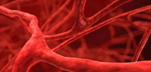 სისხლძარღვები